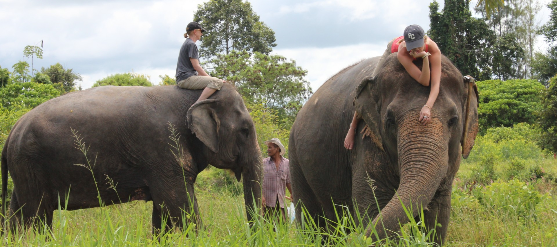 Working With Elephants